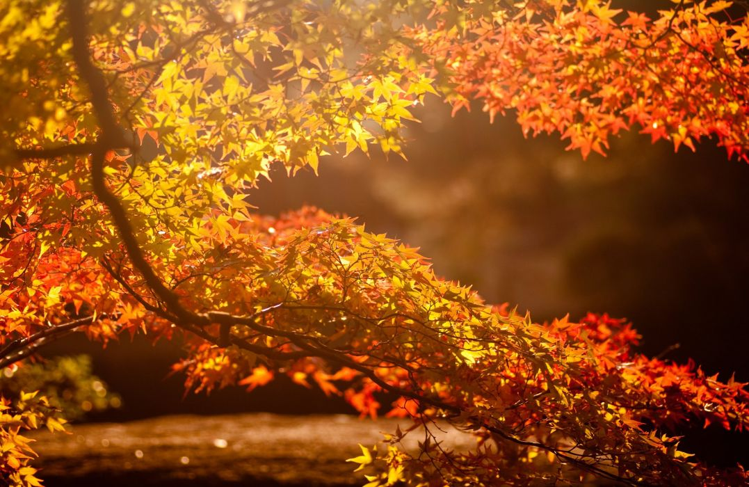 branch autumn highlights the sun leaves tree background wallpaper