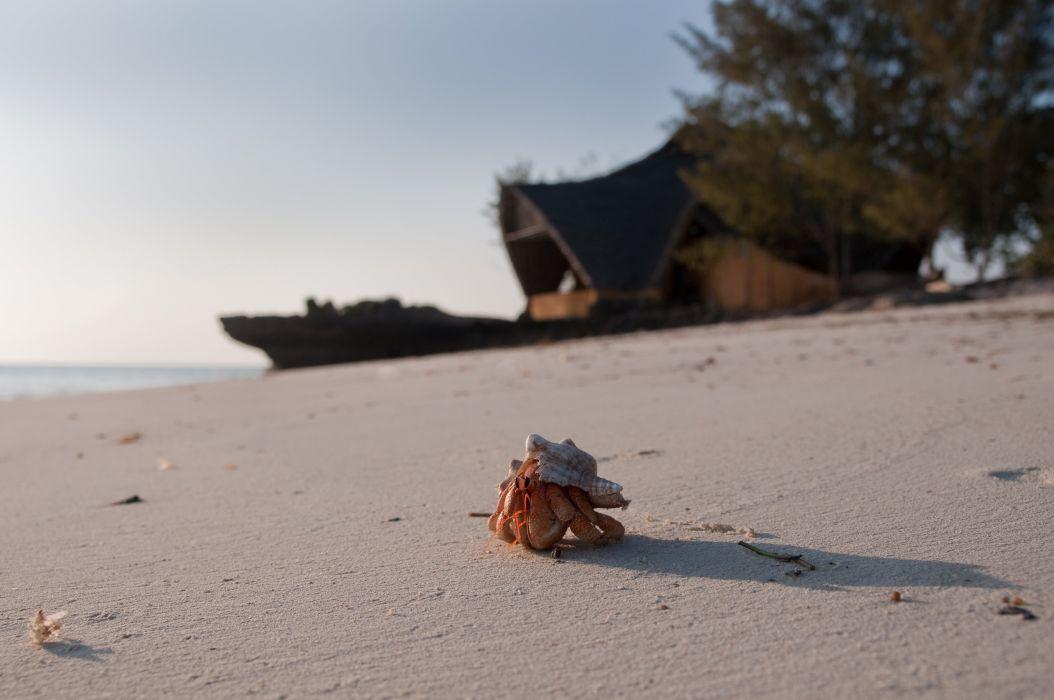 HERMIT CRAB crabs sealife wallpaper