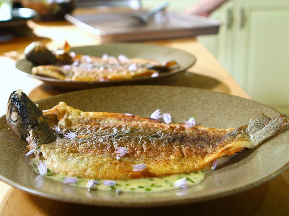 TROUT fish seafood meat wallpaper