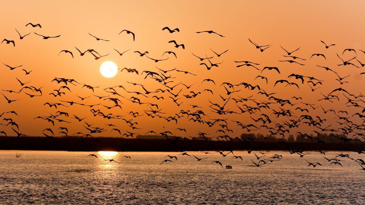 volga seagulls sunset wallpaper