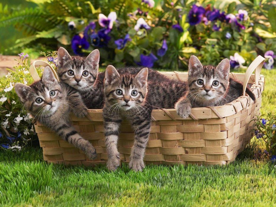 grass basket kittens cute wallpaper