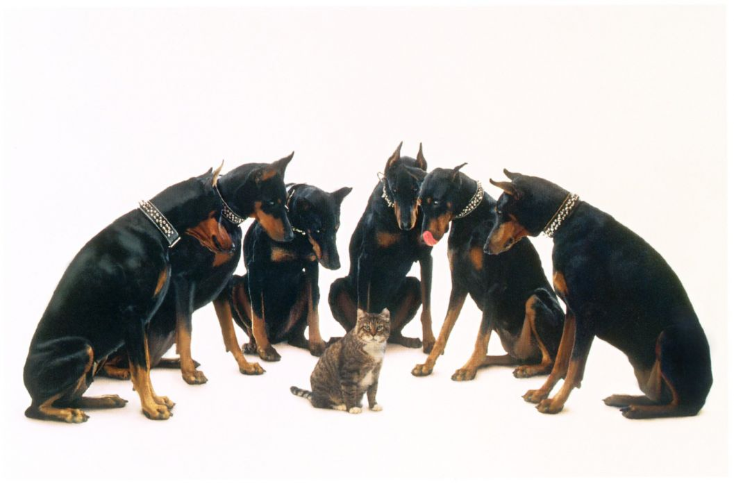Picture Of Dogs And Cats In A Row