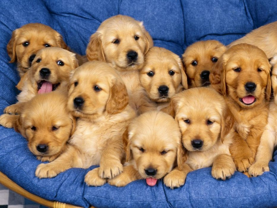 Top DOG WALLPAPERS images Animal kingdom Cute dogs Cute