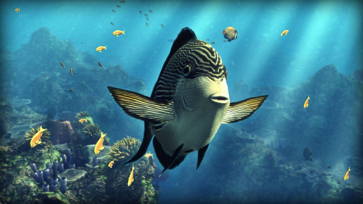 TANG tropical fish ocean sea underwater wallpaper