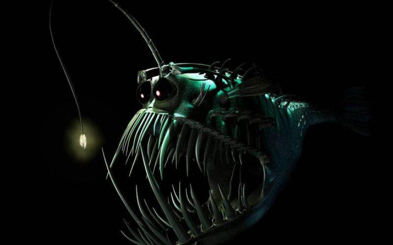 Anglerfish Fish Ocean Sea Underwater Dark Creepy Monster