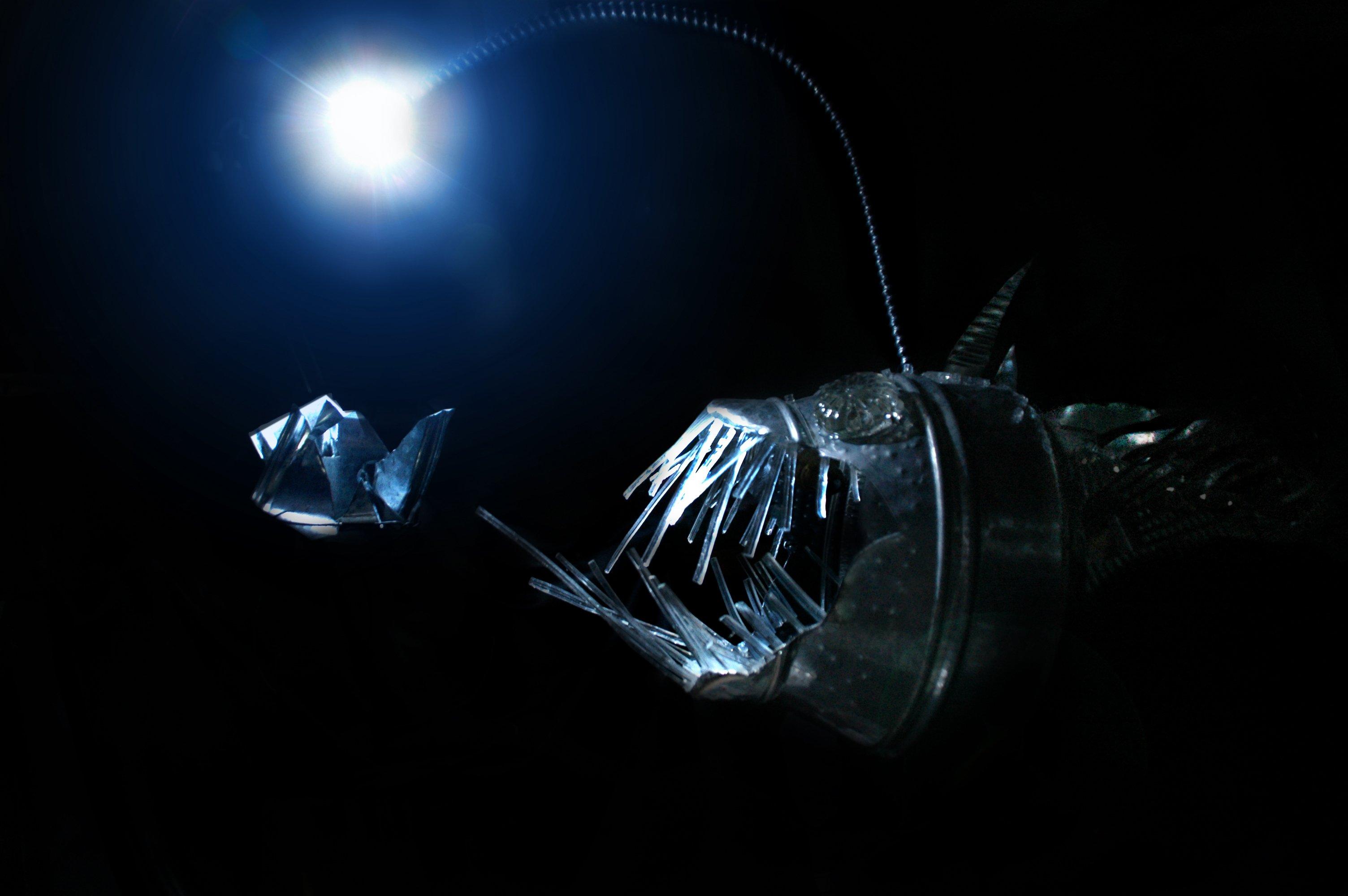 Anglerfish fish ocean sea underwater dark creepy monster for Angler fish light