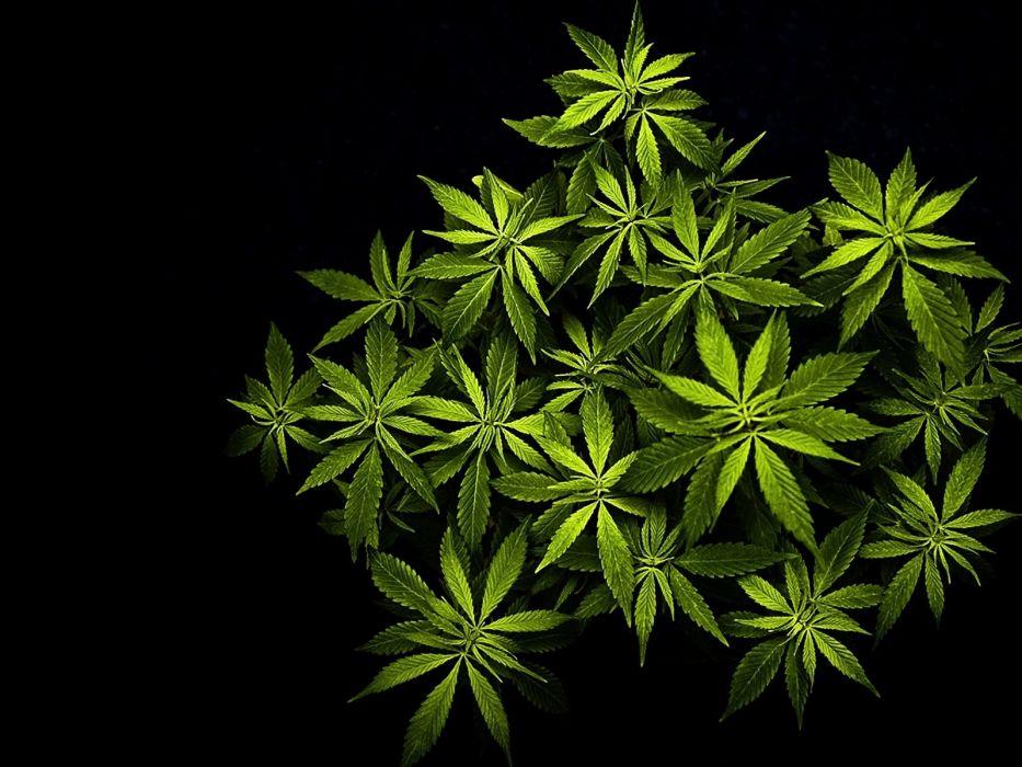 Marijuana 420 Weed Mary Jane Drugs Wallpaper 1600x1200