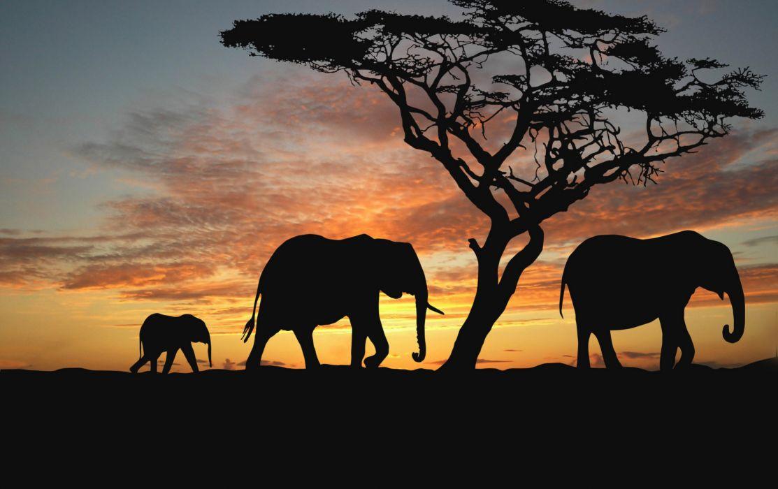Sunset Africa Elephants Nature Animals Wallpapers Evening Africa