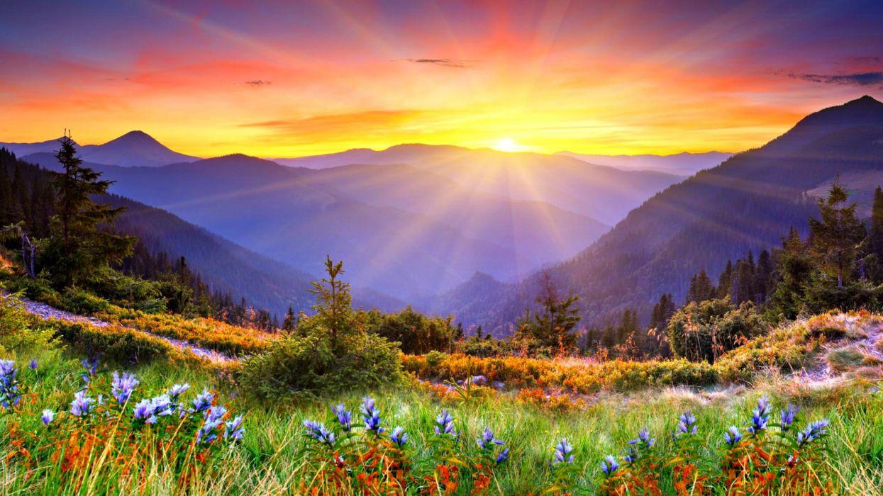 mountains flowers sunrise wallpaper