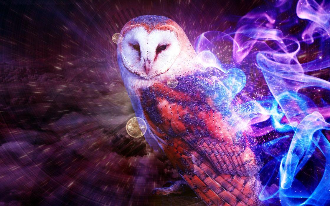 bird owl animal wallpaper