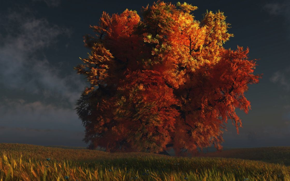 fall autumn foliage tree dusk wallpaper