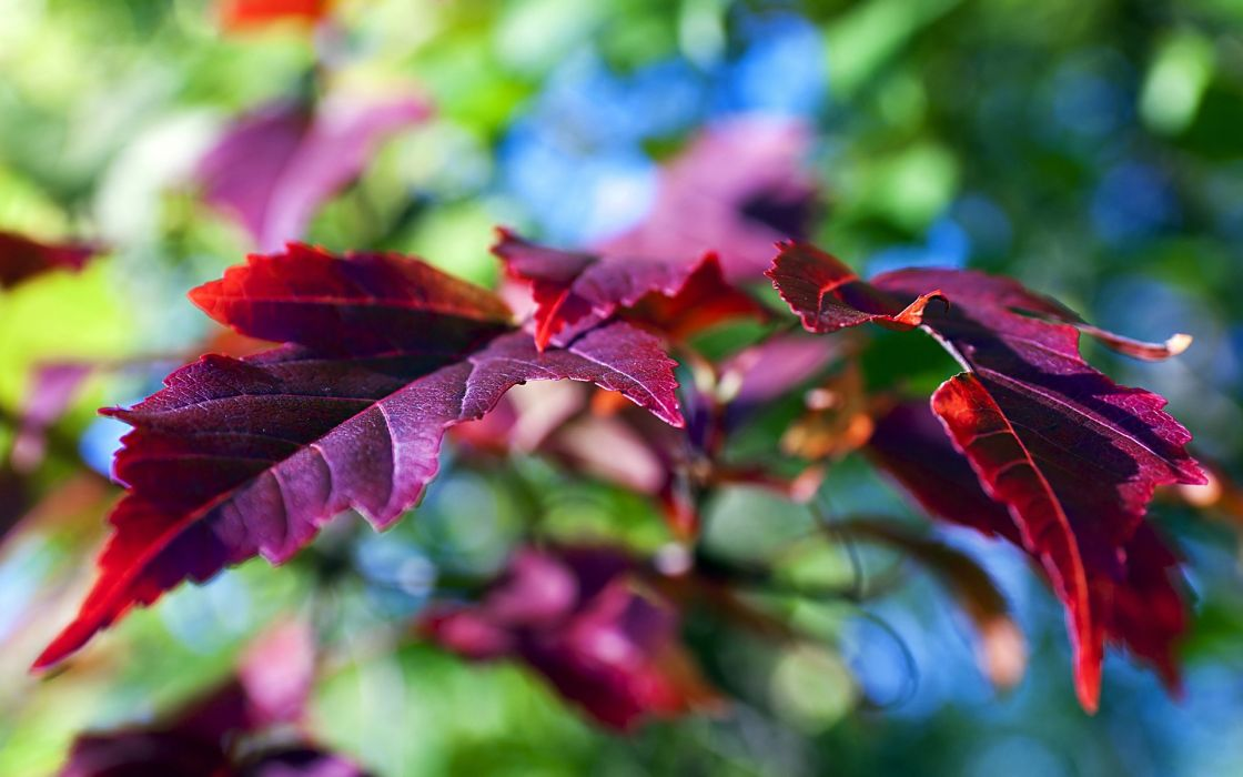 fall autumn foliage wallpaper