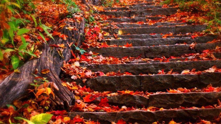 autumn steps fall foliage leaves wallpaper