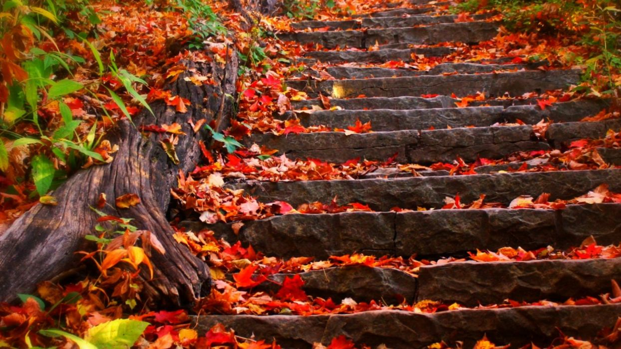 autumn steps fall foliage leaves wallpaper