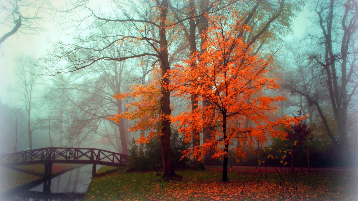 fall autumn tree foliage bridge fog wallpaper