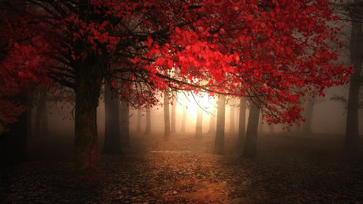 tree forest red wallpaper