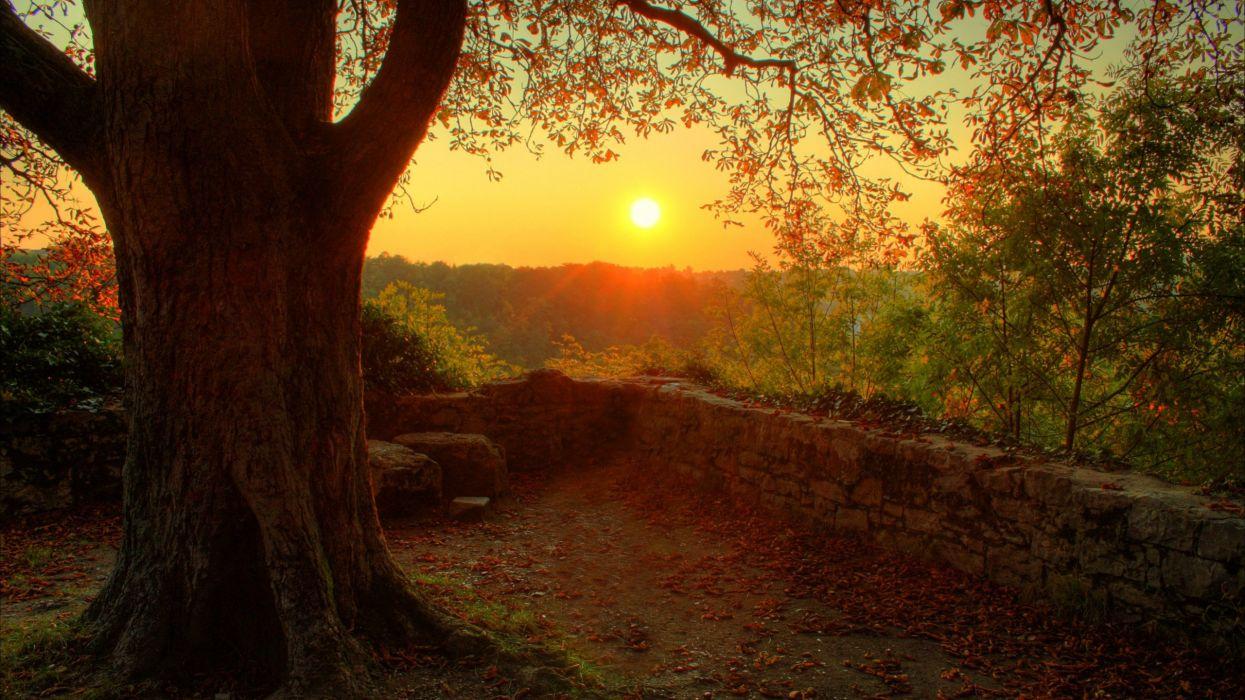 autumn fall trees dusk sunset wallpaper