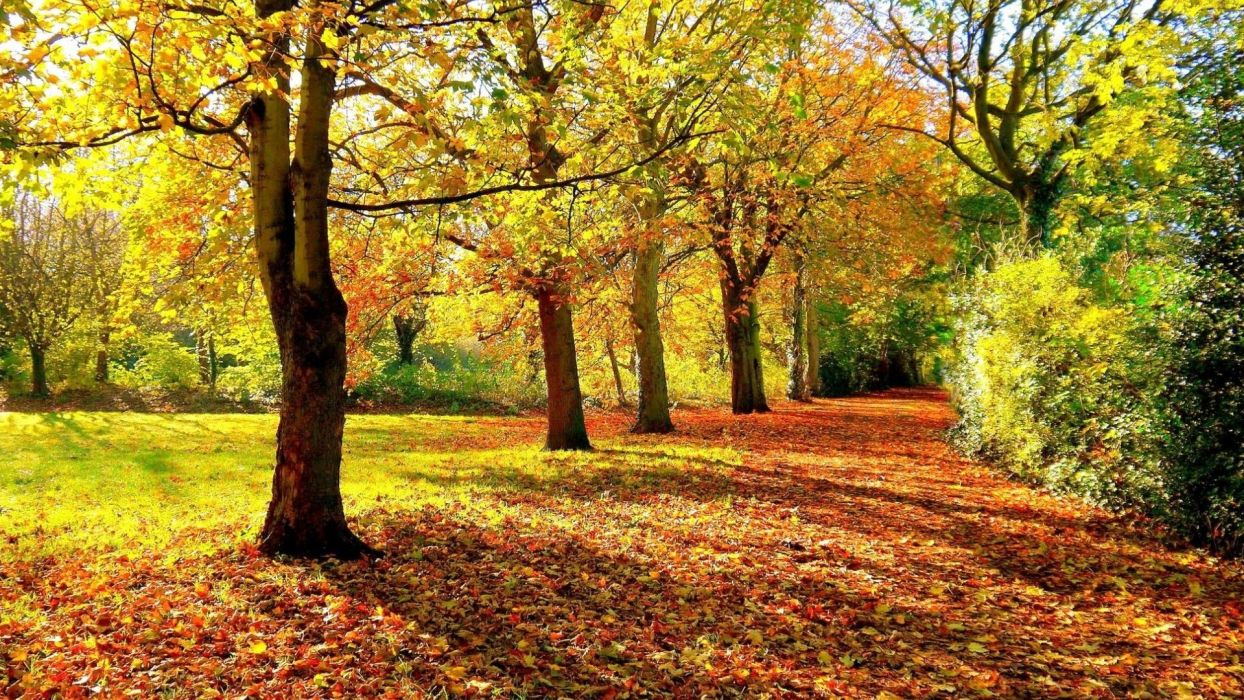autumn fall hedge leaves foliage trees wallpaper