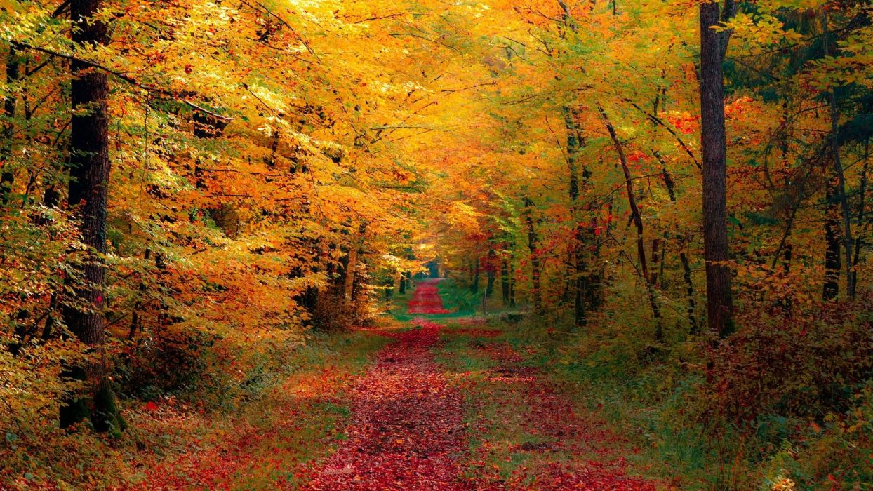 autumn fall path trees leaves foliage wallpaper
