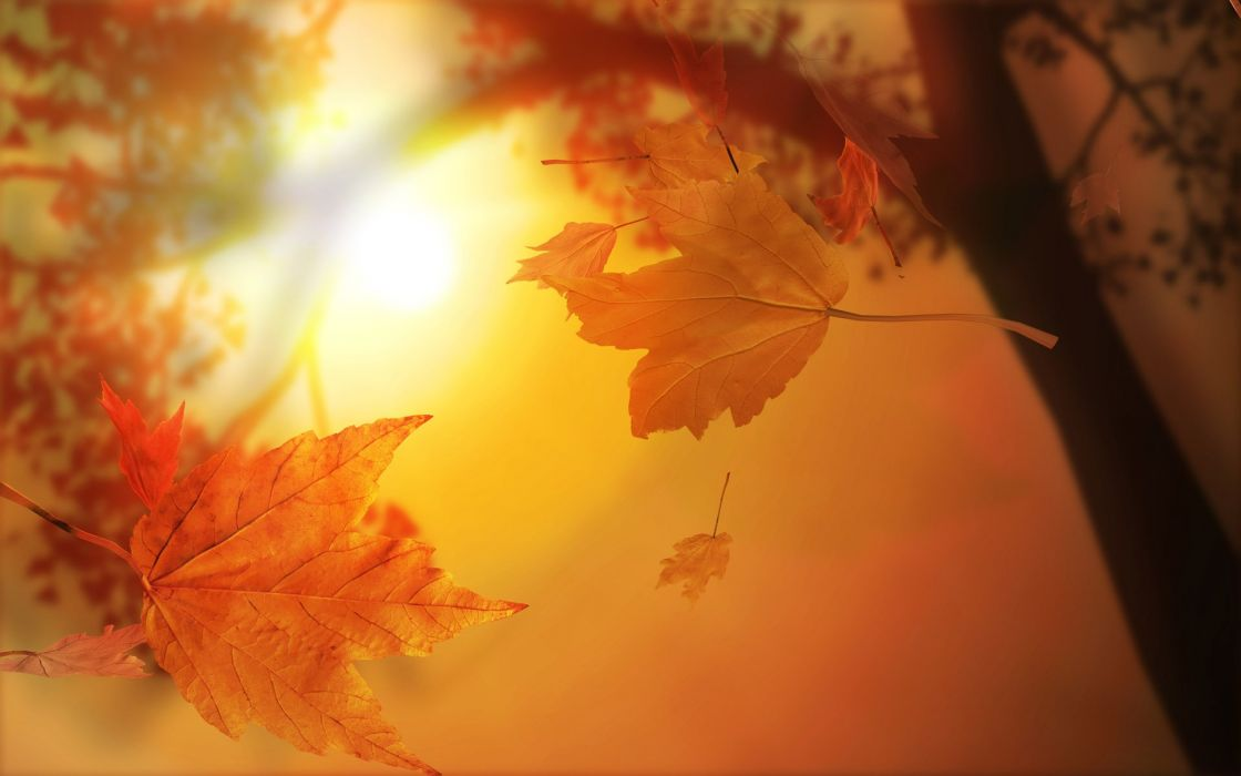 autumn fall foliage wallpaper