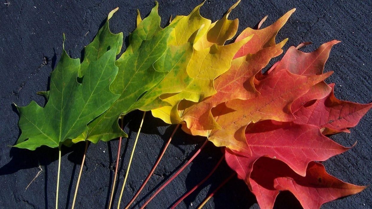 autumn foliage spectrum wallpaper