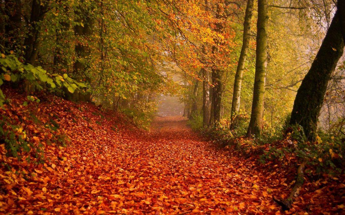 autumn path trees leaves foliage wallpaper