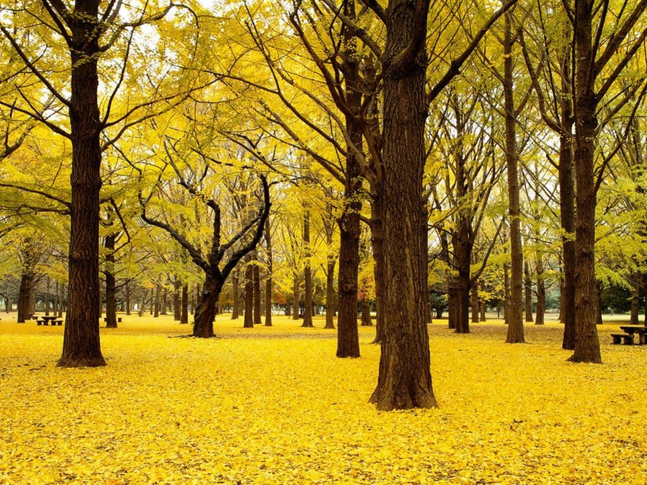 leaves foliage yellow tree trunks wallpaper