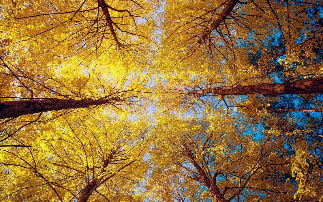 leaves foliage wallpaper