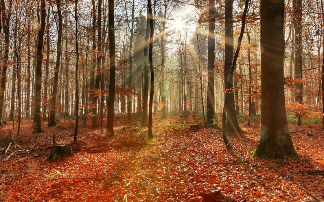 trees path forest foliage leaves wallpaper