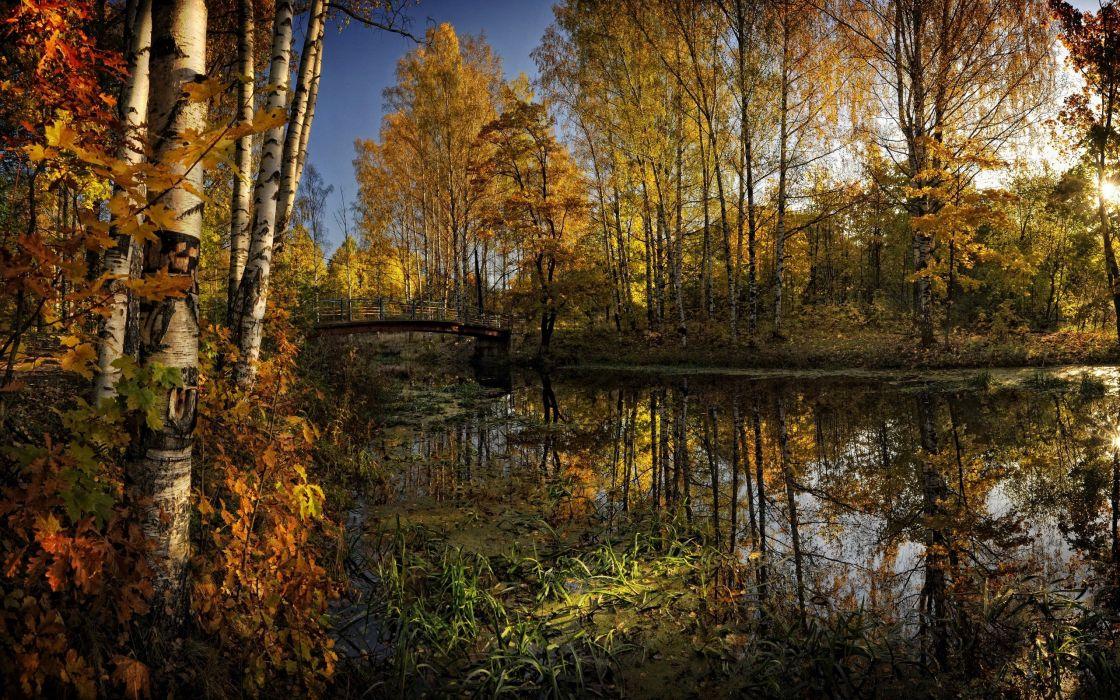 lake river trees leaves foliage wallpaper