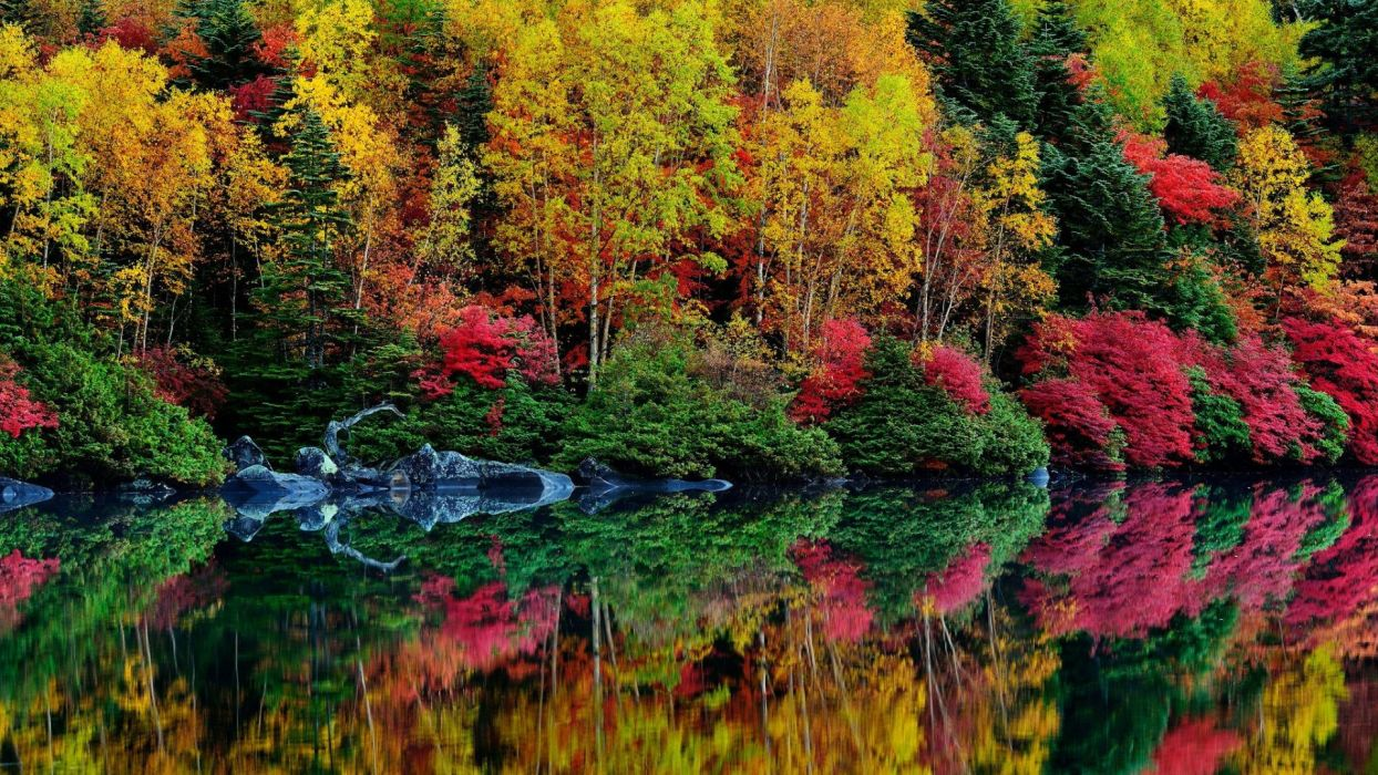 autumn river reflection leaves trees foliage purple colorful wallpaper