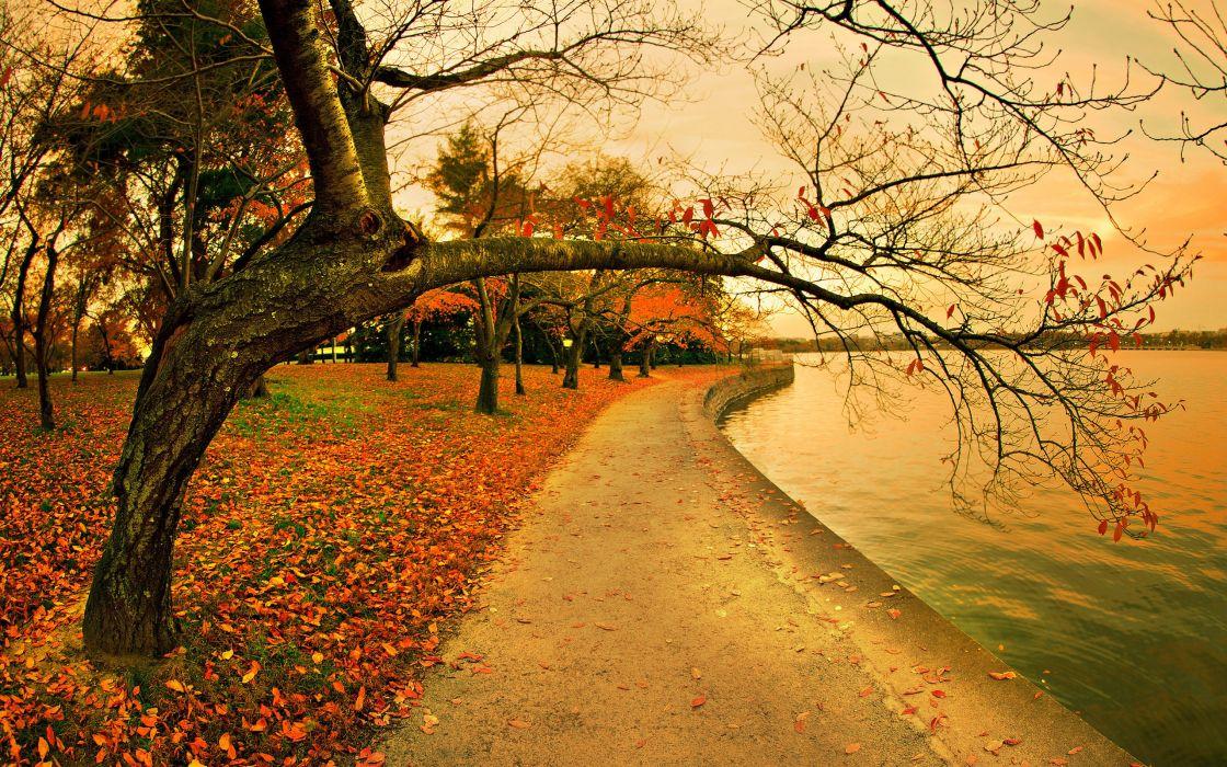 autumn park lake path foliage trees wallpaper