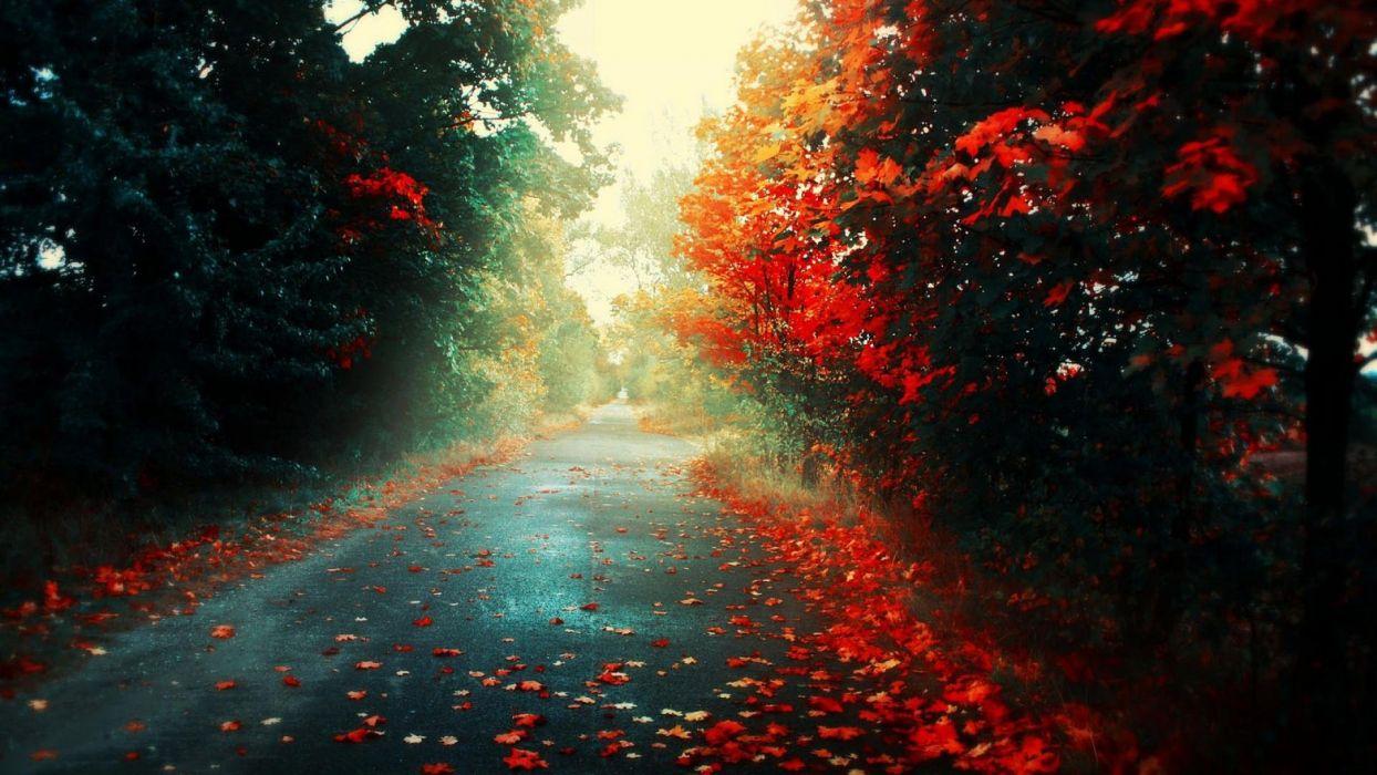 autumn path foliage trees wallpaper