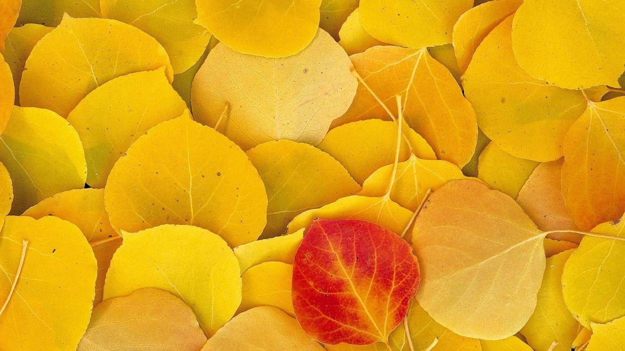 autumn golden foliage wallpaper