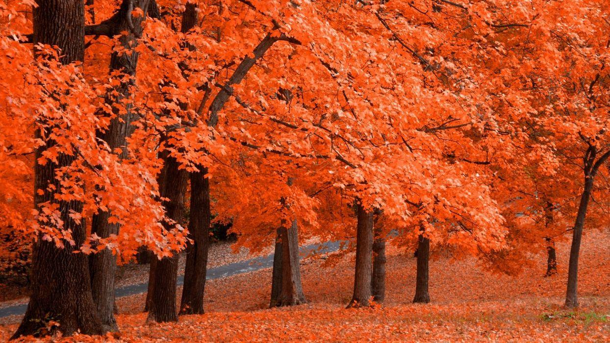 autumn foliage orange selective color wallpaper