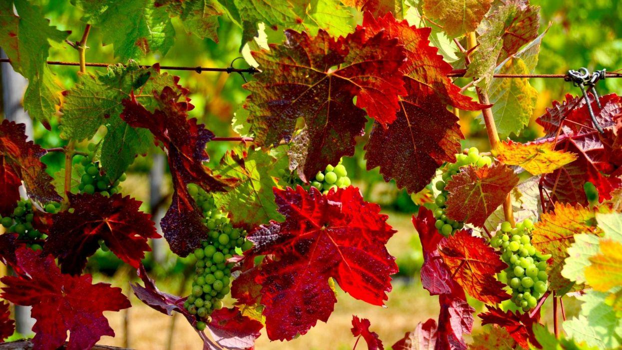 autumn foliage wallpaper