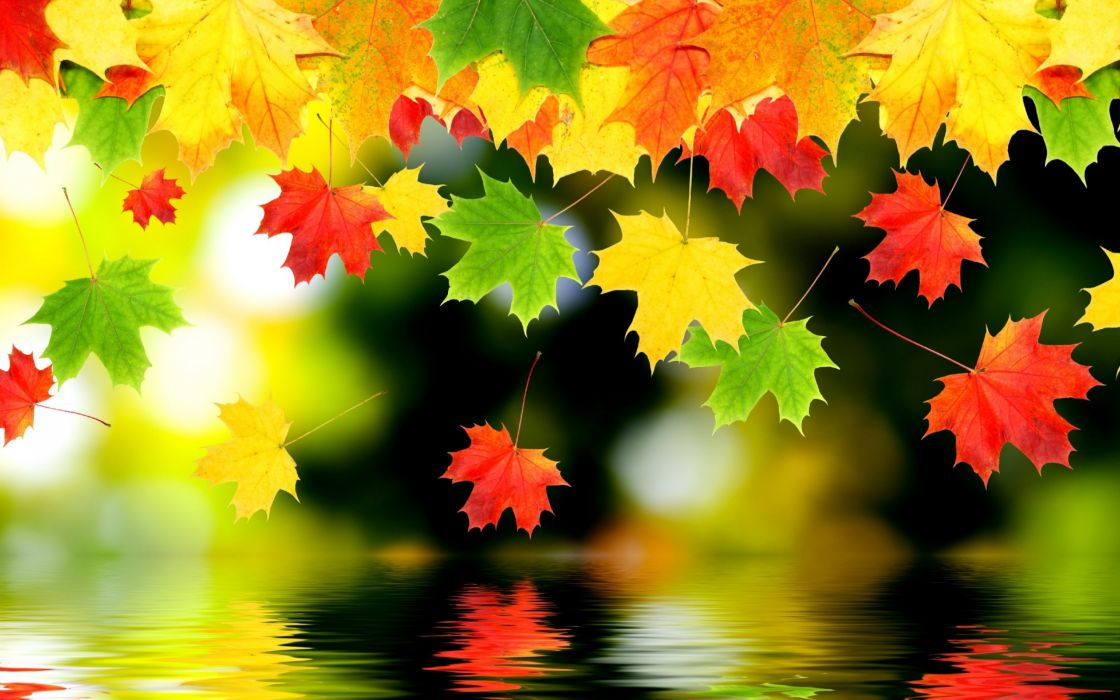 autumn fall foliage water wallpaper