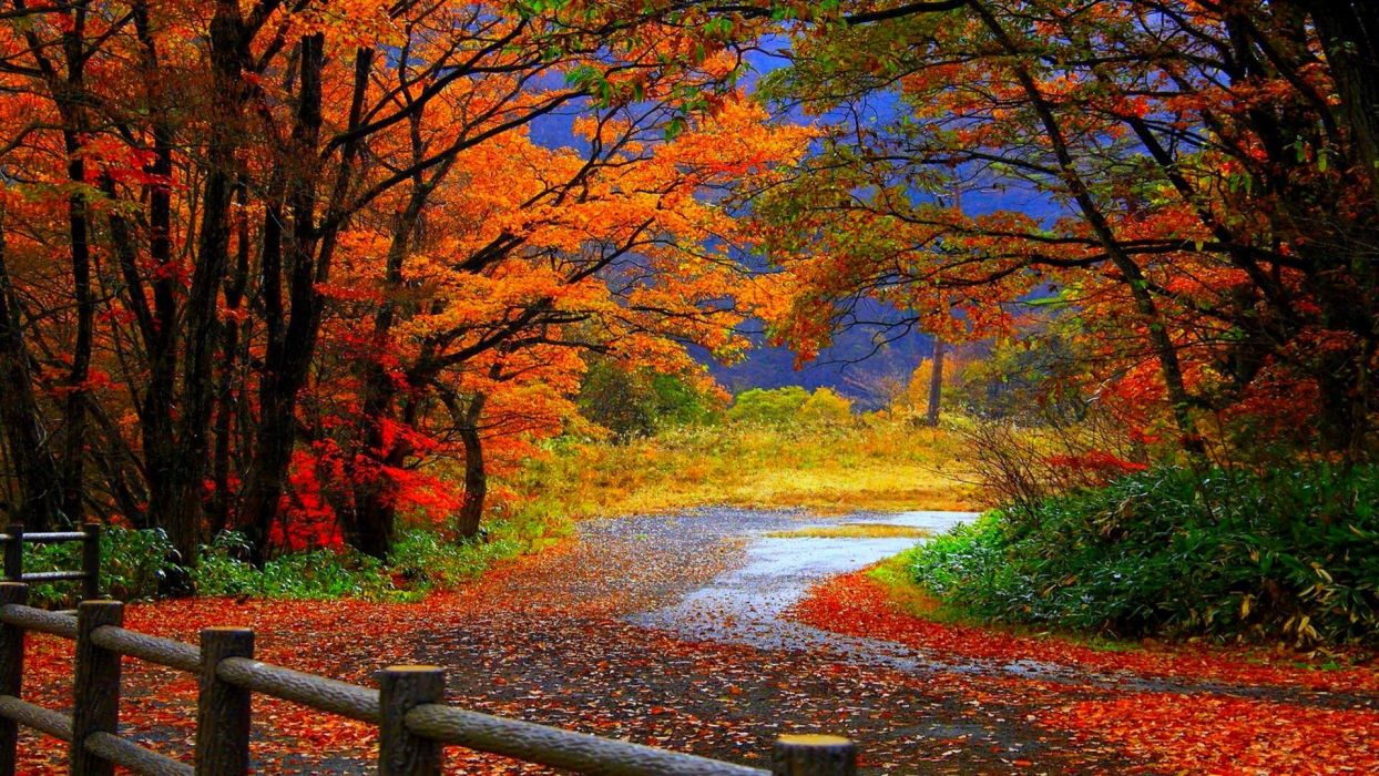 autumn fall trees fence path trail colorful leaves foliage wallpaper