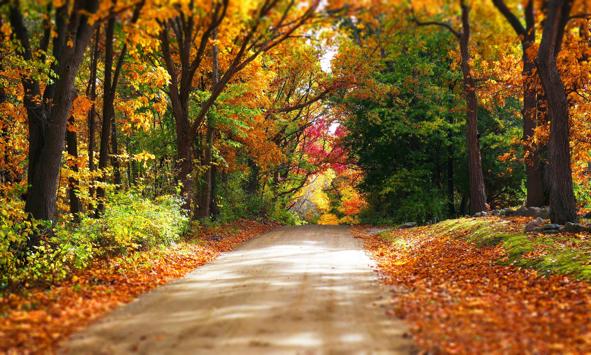 Colorful forest road trees autumn park path nature leaves ...