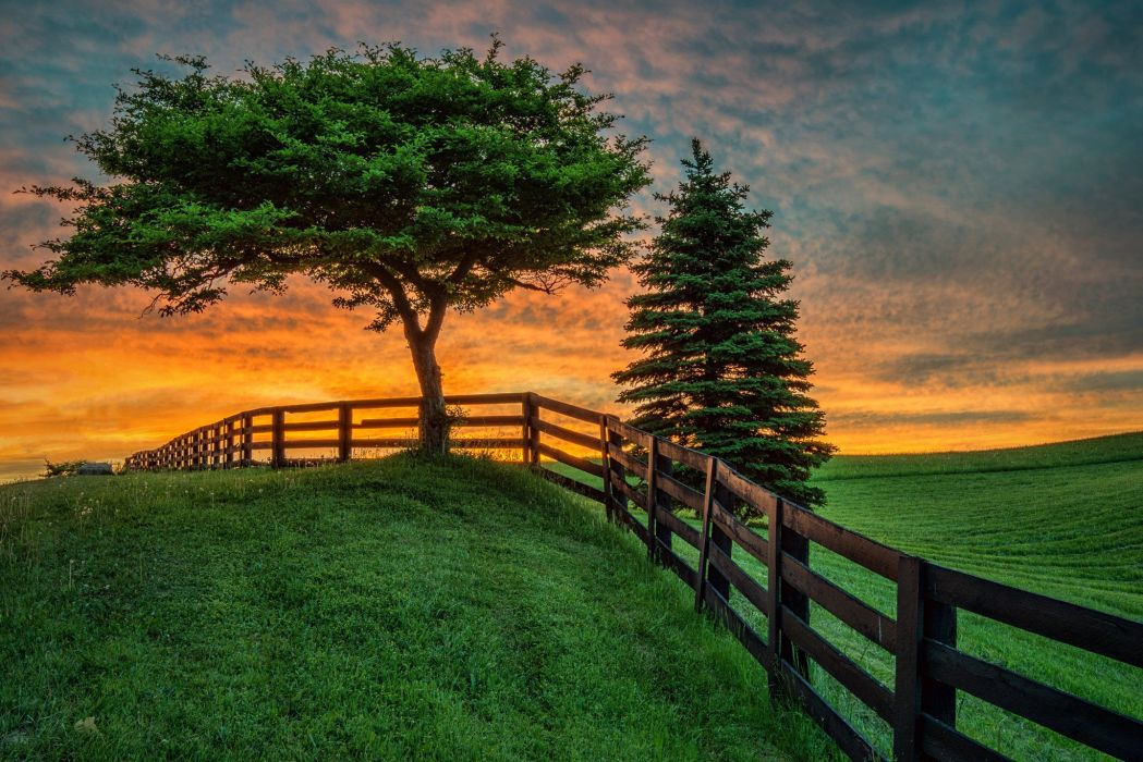 summer fence tree sunset field landscape wallpaper