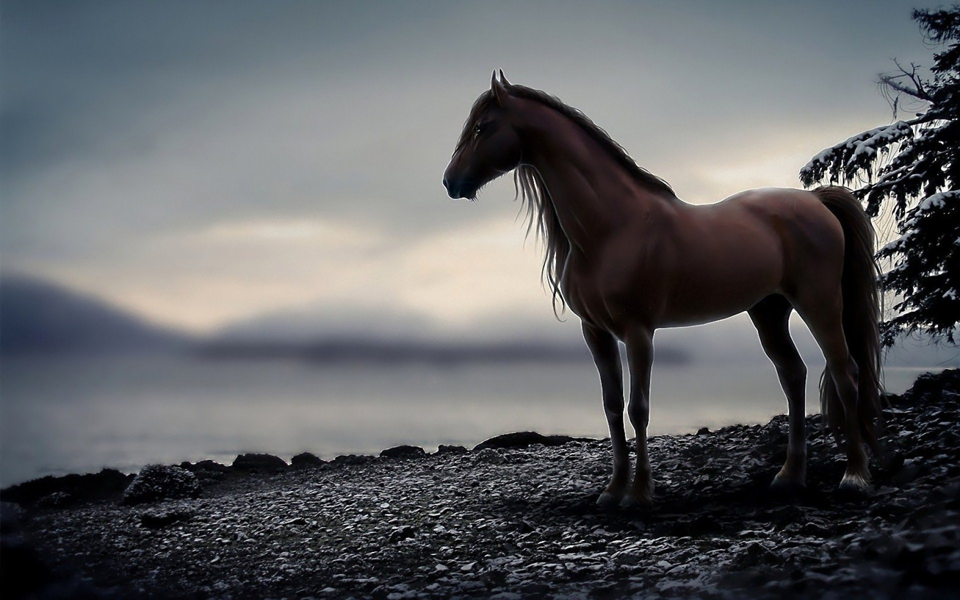 island mountain horse wallpaper - photo #23