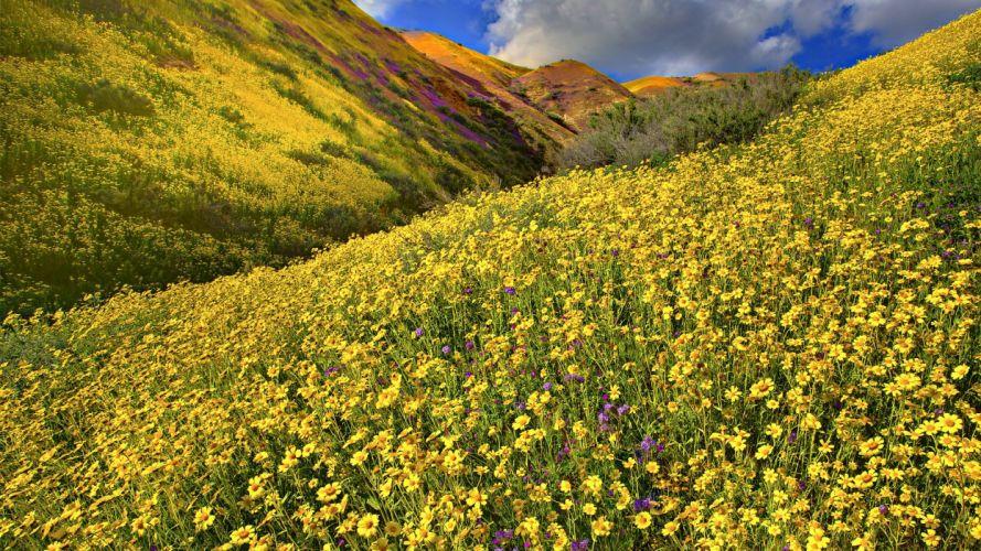 flower nature beautiful flowers plant wallpaper