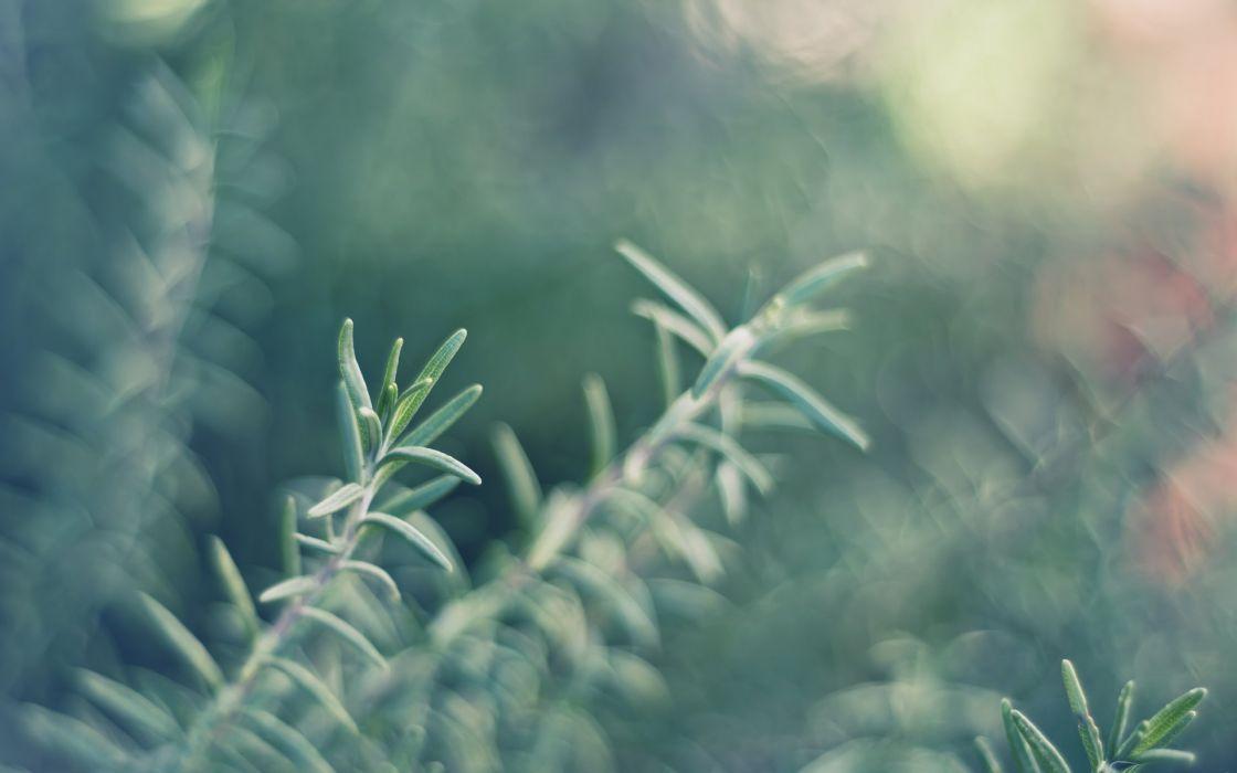 macro plant nature wallpaper