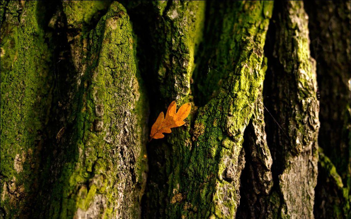 macro leaf wood wallpaper