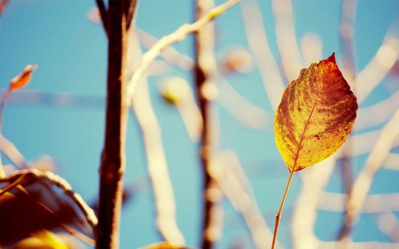 macro leaf nature wallpaper