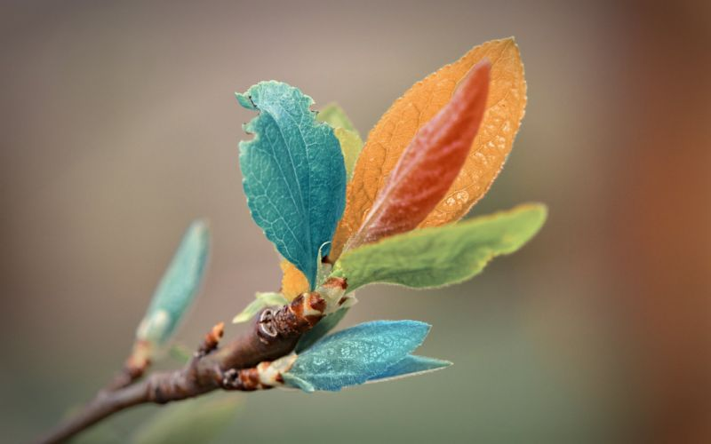 macro leaves plant nature colors colorful wallpaper