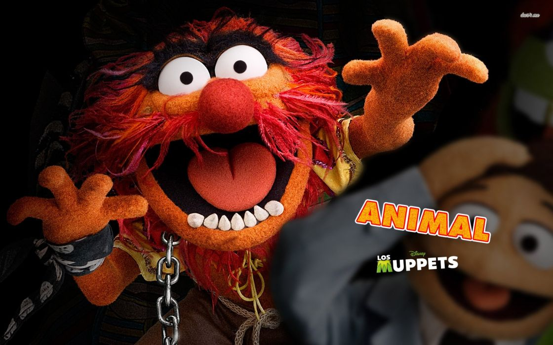 animal-the-muppets wallpaper