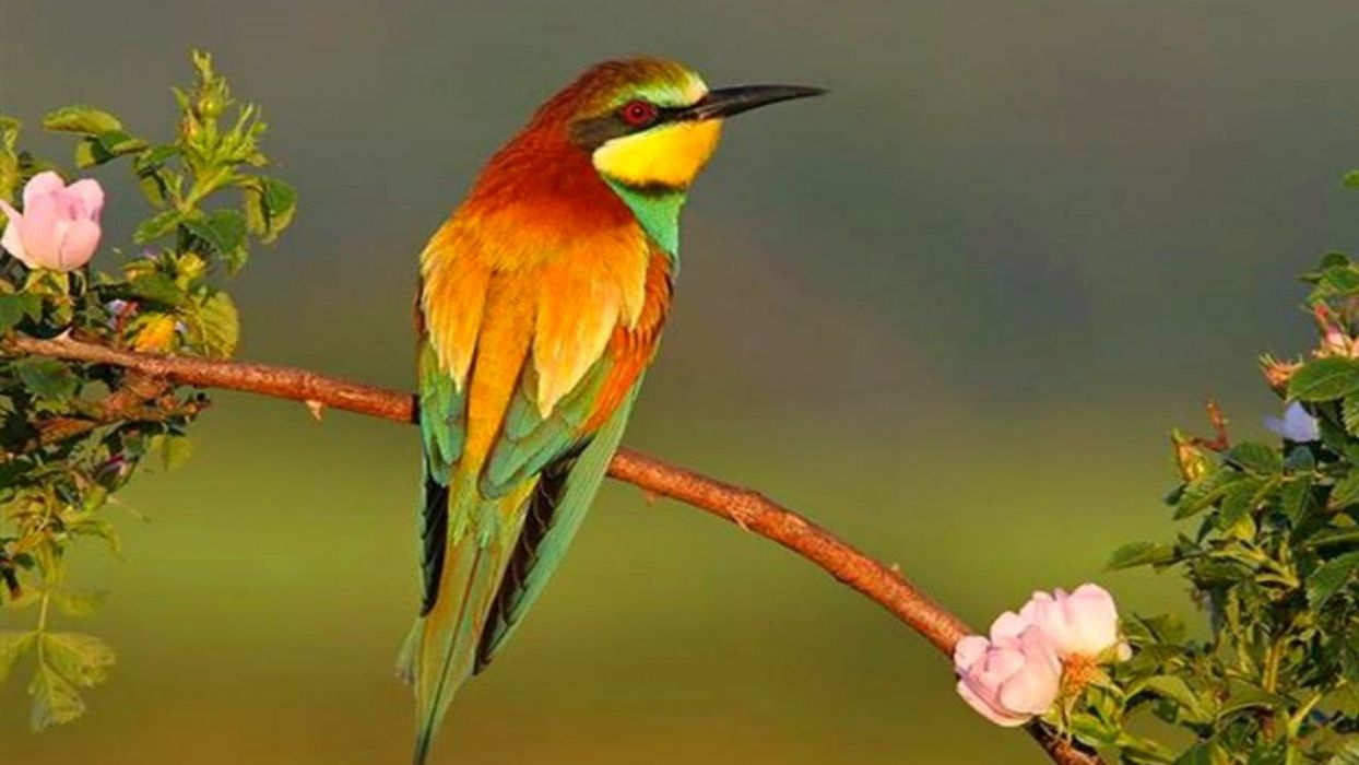 bird animal beautiful wild wings exotic birds wallpaper