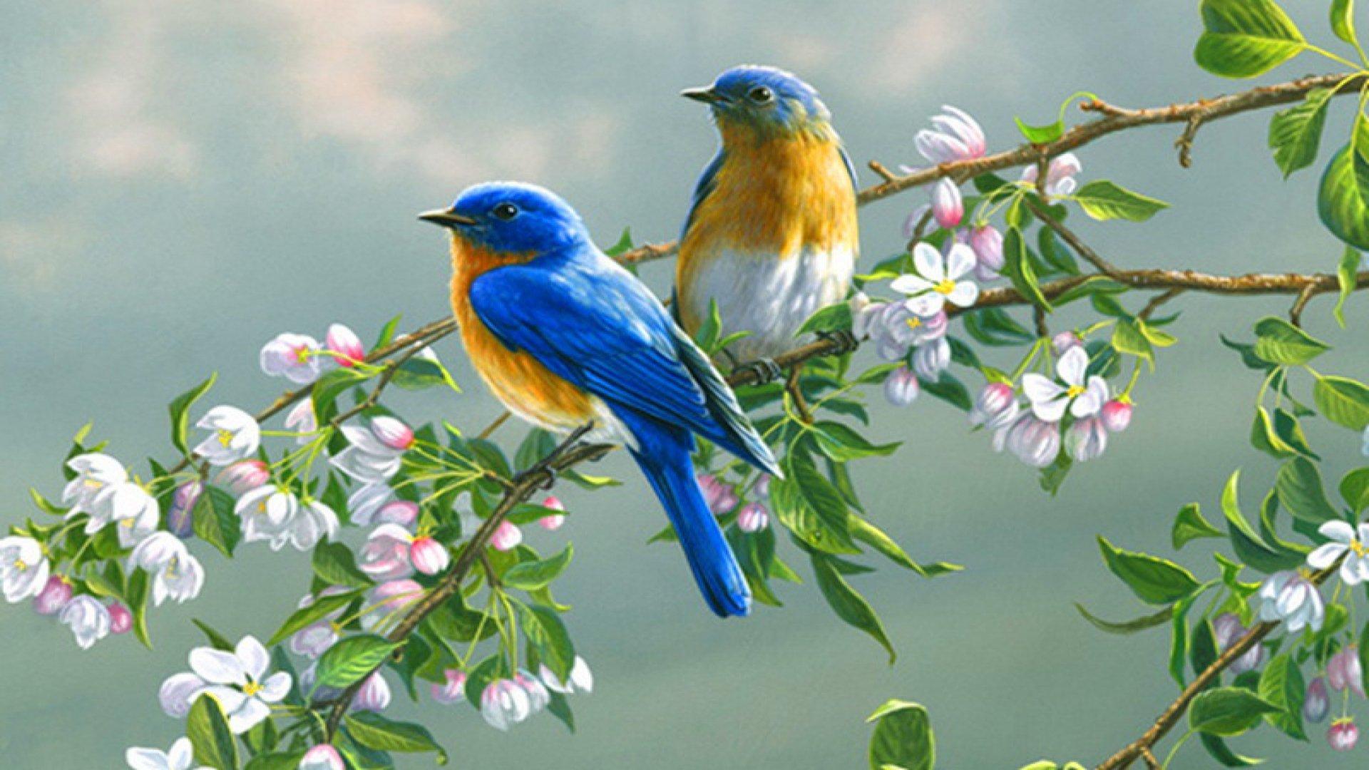 Bird Animal Beautiful Wild Wings Exotic Birds Wallpaper 1920x1080