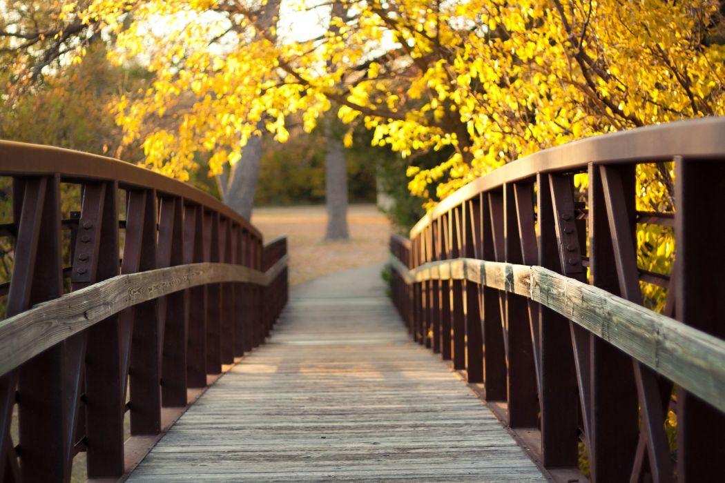 Bridge autumn trees sunlight wallpaper